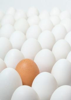 Oeuf brun parmi une multitude d'oeufs blancs. concept de différence.