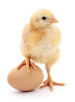 Oeuf brun et poulet isolé sur un blanc