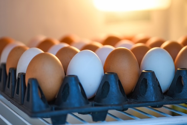 Œufs au réfrigérateur pour le stockage / œufs de poule frais et œufs de canard en boîte