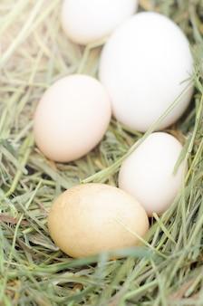 Oeufs blancs de poulet, canards, oies sur du foin frais. le nid d'oiseau.