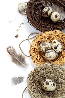 Oeufs de caille au nid