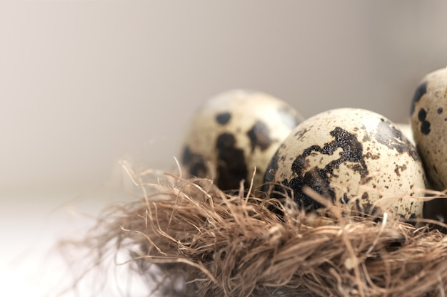 Oeufs de caille dans le nid de paille sur pastel clair