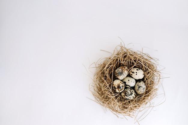 Œufs de caille dans un nid