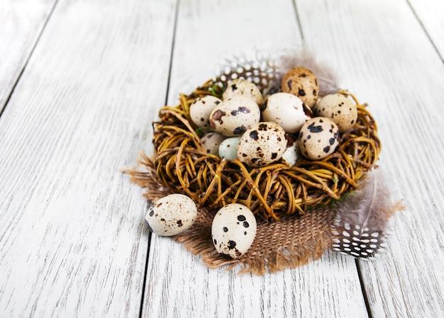 Œufs de caille dans le nid
