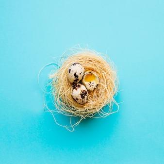 Œufs de caille entiers et fêlés au nid