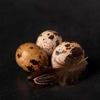 Oeufs de caille gros plan avec plume