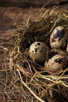 Oeufs de caille sur un nid