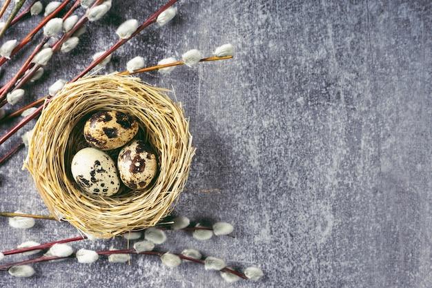 Oeufs de caille de pâques dans un nid de paille et branche de saule avec de l'argent doux moelleux sur fond de béton gris.