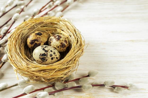 Oeufs de caille de pâques dans un nid de paille et branche de saule avec de l'argent doux et moelleux