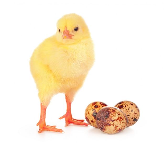 Oeufs colorés de pâques et mignon petit poulet isolé sur blanc