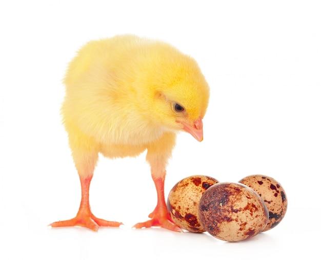 Oeufs colorés de pâques et mignon petit poulet isolé