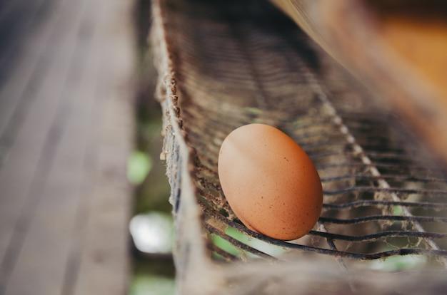 Oeufs dans un bac dans la ferme de poulet.