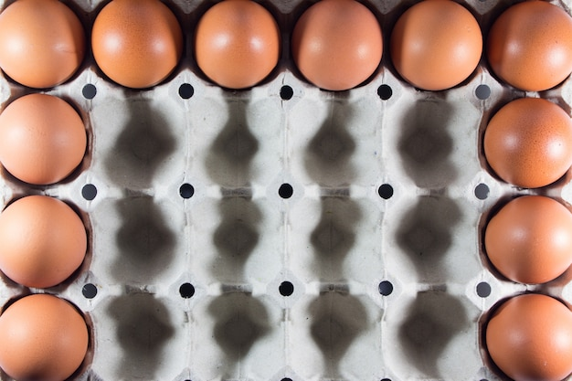 Œufs frais de la ferme dans le tableau blanc.
