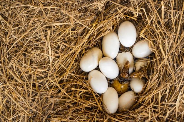 Les œufs et les larves de crocodiles sont nés