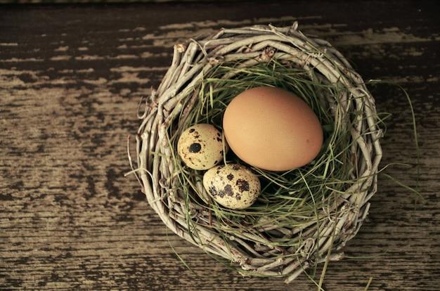 Œufs de nid