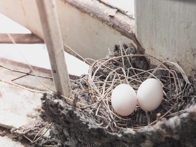 Œufs d'oiseau dans le nid de paille