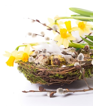 Œufs de pâques au nid avec narcisse