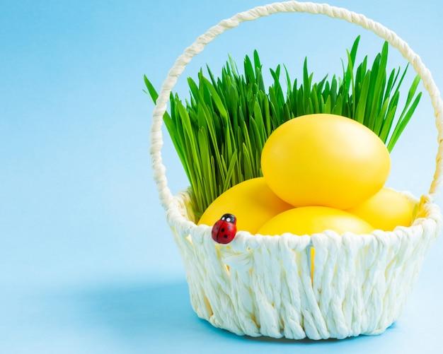 Oeufs de pâques colorés dans un panier avec de l'herbe décorative. fond bleu concept de vacances de pâques.