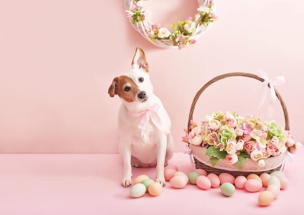 Oeufs de pâques et fleurs. panier de pâques et chien avec fleurs et oeufs sur fond rose