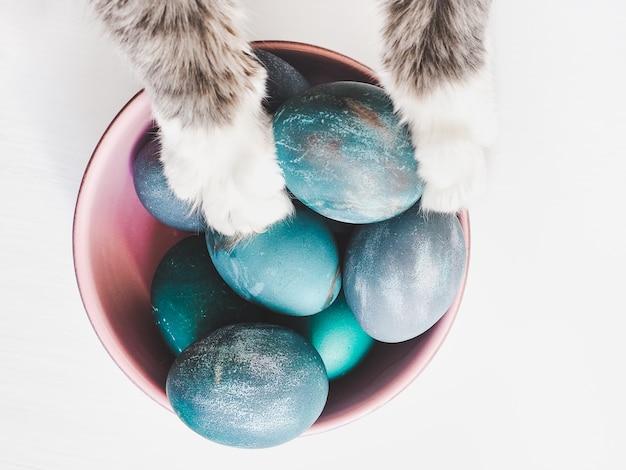 Oeufs de pâques peints avec des couleurs vives et un charmant chaton
