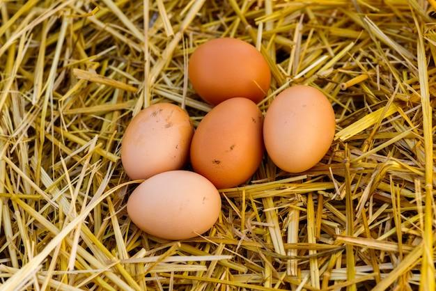 Les œufs de poule brun naturel reposent sur la paille