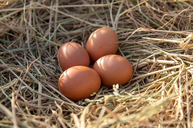 Œufs de poule dans un nid de poulet sur paille de riz