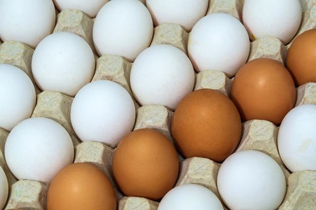 Oeufs de poulet blancs et bruns frais dans le bac