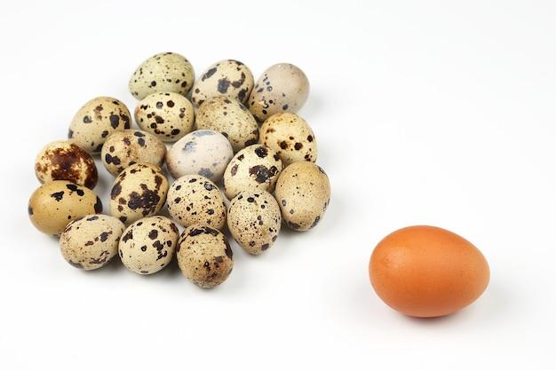 Œufs de poulet et de caille sur fond blanc