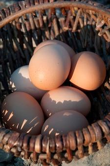 Oeufs de poulet dans un panier