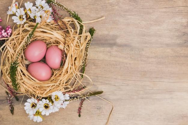 Oeufs roses dans le nid