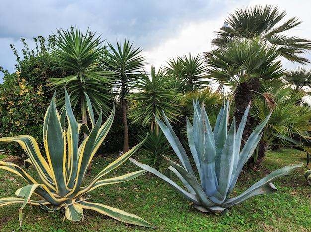 Offrez des plantes d'aloe vera et des palmiers et un ciel nuageux derrière.