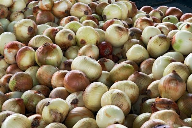 Oignon blanc sur l'étal du marché