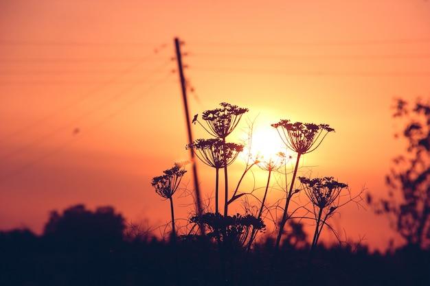 Oignon en face du coucher de soleil