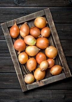 Oignons frais sur plateau. sur table en bois
