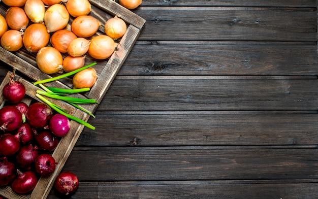 Oignons rouges et jaunes sur le plateau et un bouquet d'oignons verts. sur fond de bois