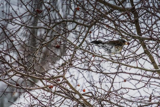 Oiseau affamé sur un arbre