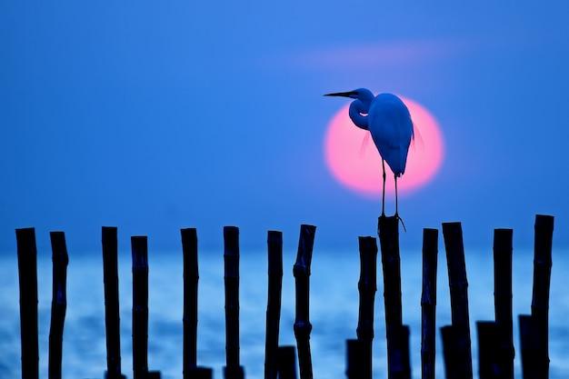 Oiseau aigrette et soleil