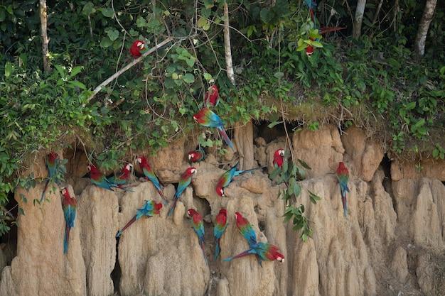 Oiseau d'amérique du sud dans l'habitat naturel