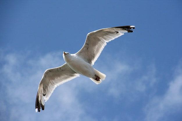 Oiseau aquatique