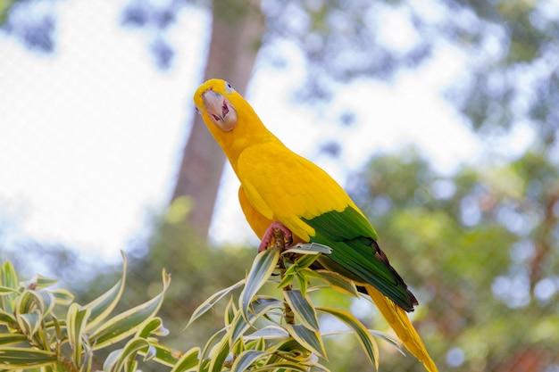 Oiseau ararajuba jaune et vert sur une perche