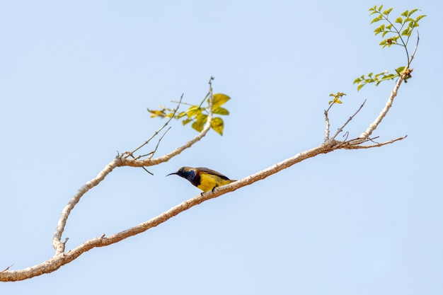 Oiseau sur l'arbre