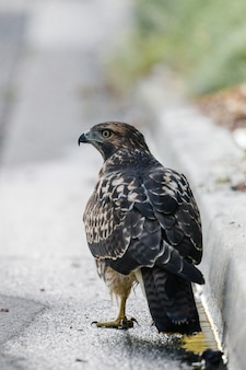 Oiseau au sol