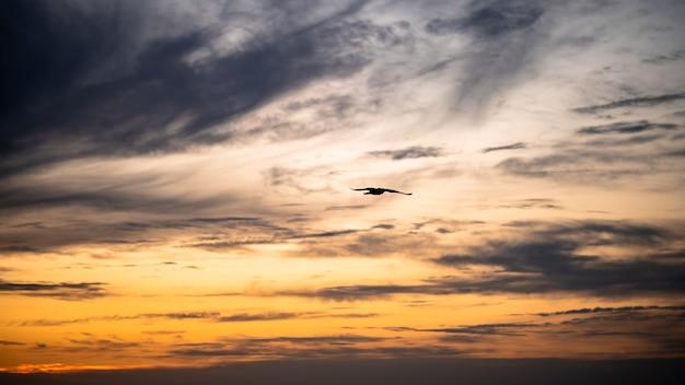 Oiseau aux ailes ouvertes sur fond de coucher de soleil. silhouette de mouette sur ciel dramatique