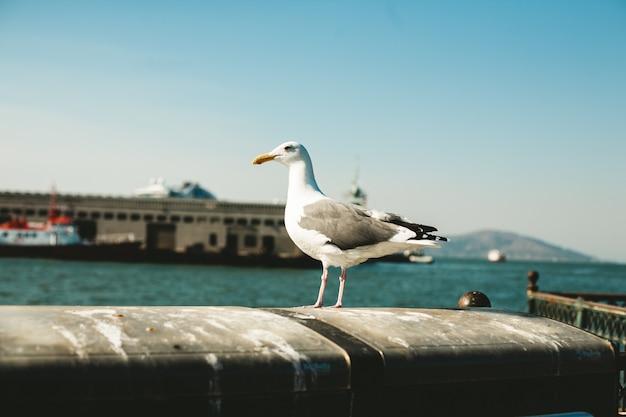 Oiseau blanc se dresse au bord du balcon