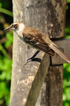 Oiseau sur un bois