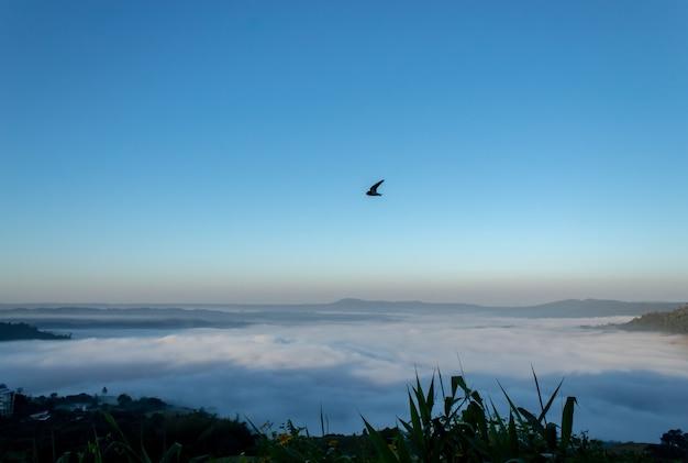 Oiseau et brume matinale à khao kho, phetchabun en thaïlande.