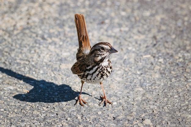 Oiseau brun et blanc sur un sol en béton gris pendant la journée