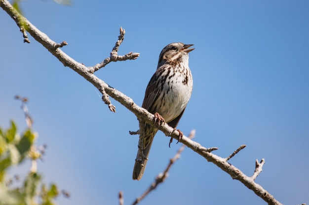 Oiseau brun sur une branche d'arbre brun pendant la journée