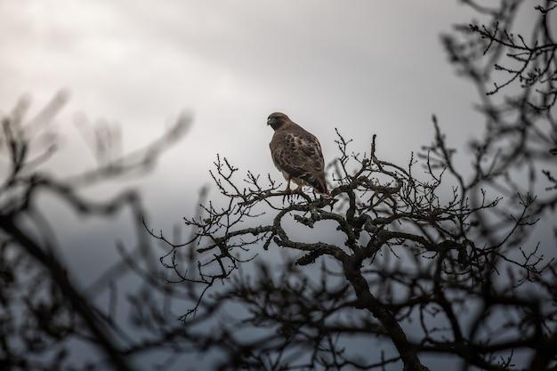 Oiseau brun sur une branche d'arbre pendant la journée