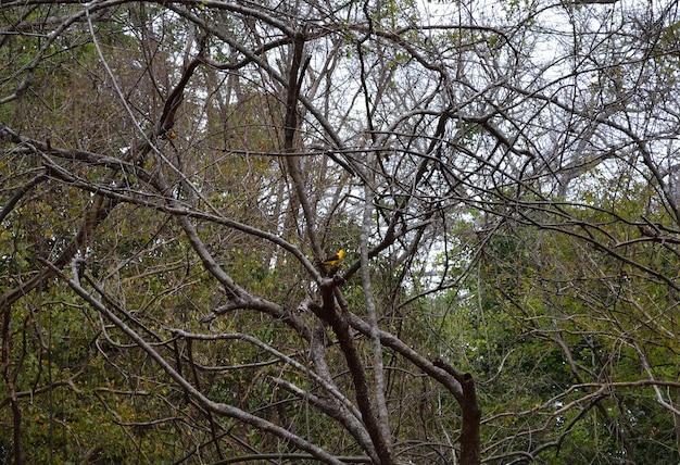 Oiseau coloré dans un arbre